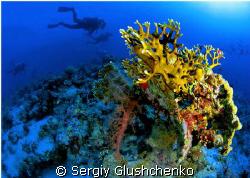 Corals by Sergiy Glushchenko