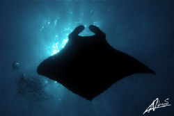 manta above me against the sunburst... by Adriano Trapani