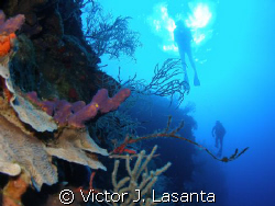 diving the wall at efra wall in  parguera area, PUERTO RICO by Victor J. Lasanta