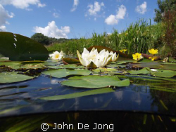 I will add some pictures of my freshwater experience the ... by John De Jong