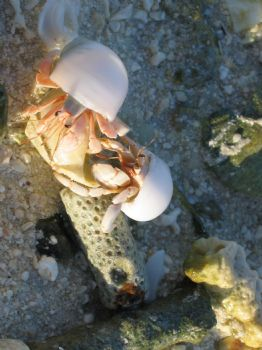 Hermit Crabs in search of a new home. by Loo Yoke Chen