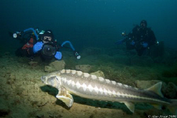 Mark and Dirk in action with the Sturgeon at Capernwray by Alan Fryer