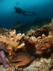 Moray with diver, Komodo, Canon G9, Inon lenses and strobes by Fatt Chuen Foo