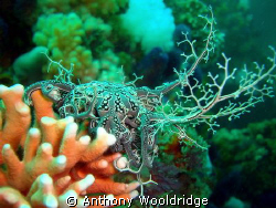 Basket Star on noble coraltaken at Crossroads in Port Eli... by Anthony Wooldridge