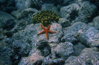 The Red Seastar taken in Turkey's Saroz Bay, near Ýbrice.... by Bora Arda