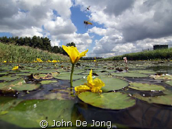 The last picture from my half/half test in the chanle clo... by John De Jong