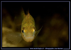 Face to Face with this beautiful Perch... :O)... by Michel Lonfat