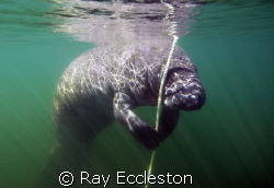Safety stop. Taken at Crystal River FL. by Ray Eccleston