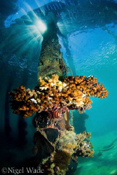 A pillar under the boat jetty at Thalassa Dive Centre Man... by Nigel Wade