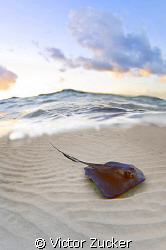stingray city by Victor Zucker