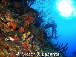 at the wall in v.j.levels dive site at parguera area, PUE... by Victor J. Lasanta