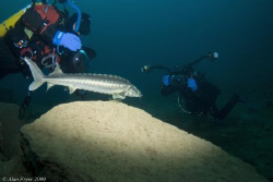 Sturgeon, Capernwray by Alan Fryer