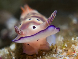 """""""Up close and personal"""" (Risbecia tryoni) - Sangean islan... by Marco Waagmeester"""