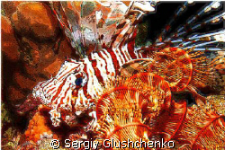 Lion Fish (night) by Sergiy Glushchenko