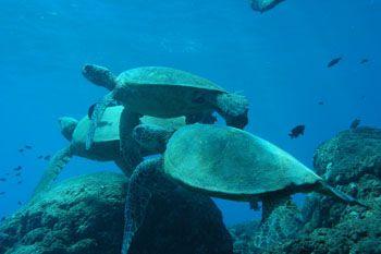 Turtle rock, Makaha Hawaii. by Charles Harvey