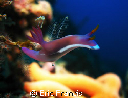 a nudi taken on sipadan in borneo, the compacts give amaz... by Eric Francis
