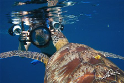 a very VAIN turtle and a big camera PAPARAZZO! by Adriano Trapani