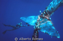 MEETING WITH BIG SPERMWALE TRAPPED IN THE NETS.