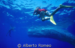 I,  my wife and our u/w team found a 60-foot (18 meter) -... by Alberto Romeo