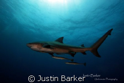 Bull Shark  and crew by Justin Barker