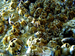 Persian Gulf Life 2 by Hamid Shamsi