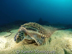 Beautiful, even when death. Green turtle found its end in... by Ramón Domínguez