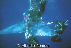 The diver of my team is cutting with his knife the net in... by Alberto Romeo
