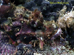 Scorpion Fish taken with Sony PC-105 by Kelly Mcgonigal