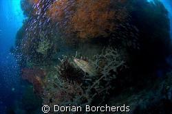 Life at Albatros Passage by Dorian Borcherds