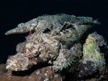 Crocodile fish taken in Mabul- Sipadan. managed to get 3D... by Richard Ng