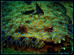 Tropical sole taken in Sodwana, normally rather skittish ... by Allen Walker