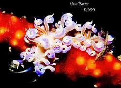found on telesto coral -Ammo Jetty Perth WA - ;-) by Dave Baxter