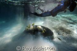 Soft landing. Taken at Crystal River FL. by Ray Eccleston