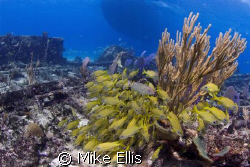 """The """"Sugar Wreck"""" on the """"Little Bahama Bank"""" Bahamas is ... by Mike Ellis"""