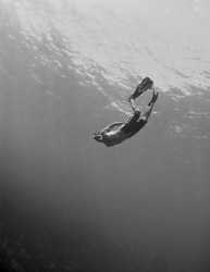 A curious snorkeler went deep enough for me to be able to... by Juan Torres