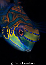 These colourful Mandarin fish never cease to amaze me and... by Debi Henshaw