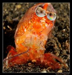 Molting Shrimp.  D300, 60mm AF-S by Kay Burn Lim
