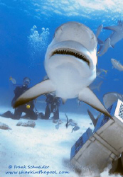 """""""SNAP-SHOT!"""" Done during a shark-feeding on the Bahamas ... by Frank Schneider"""