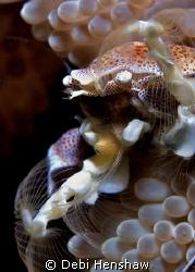 Porcelain Crab Fishing for Dinner! by Debi Henshaw