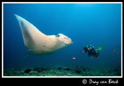 Karin and Manta. by Dray Van Beeck