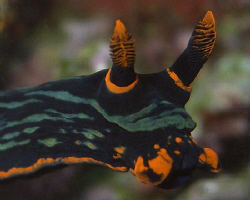A nudi that looks like a bulldog.. Casio exilim zx 1200 by Andrew Macleod