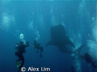 Close encounter! by Alex Lim