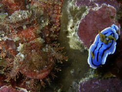Nudi and friend! Look for the fish too!! Casio exilim by Andrew Macleod