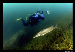 King PIKE, the Underwaterphotographer and the Icy Pond ..... by Daniel Strub