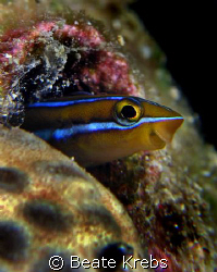 Hello neighbor II, taken at Wakatobi with Canon S70 and D... by Beate Krebs