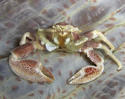 Casio exilim zx 1200.. Porcalain crab by Andrew Macleod