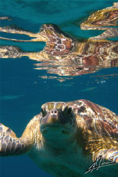 I love this turtle! it is such a natural subject for anyo... by Adriano Trapani