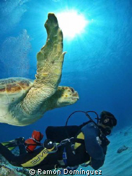 Carey turtle swimming along with my friend. by Ramón Domínguez