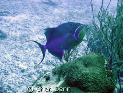 The contrast between the fish, sand and sea grass is one ... by Cheri Denn