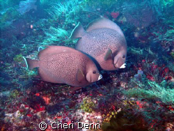 This is one of my favorites.  It was taken with a SeaLife... by Cheri Denn